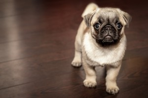 Sefima_Hundehaftplicht