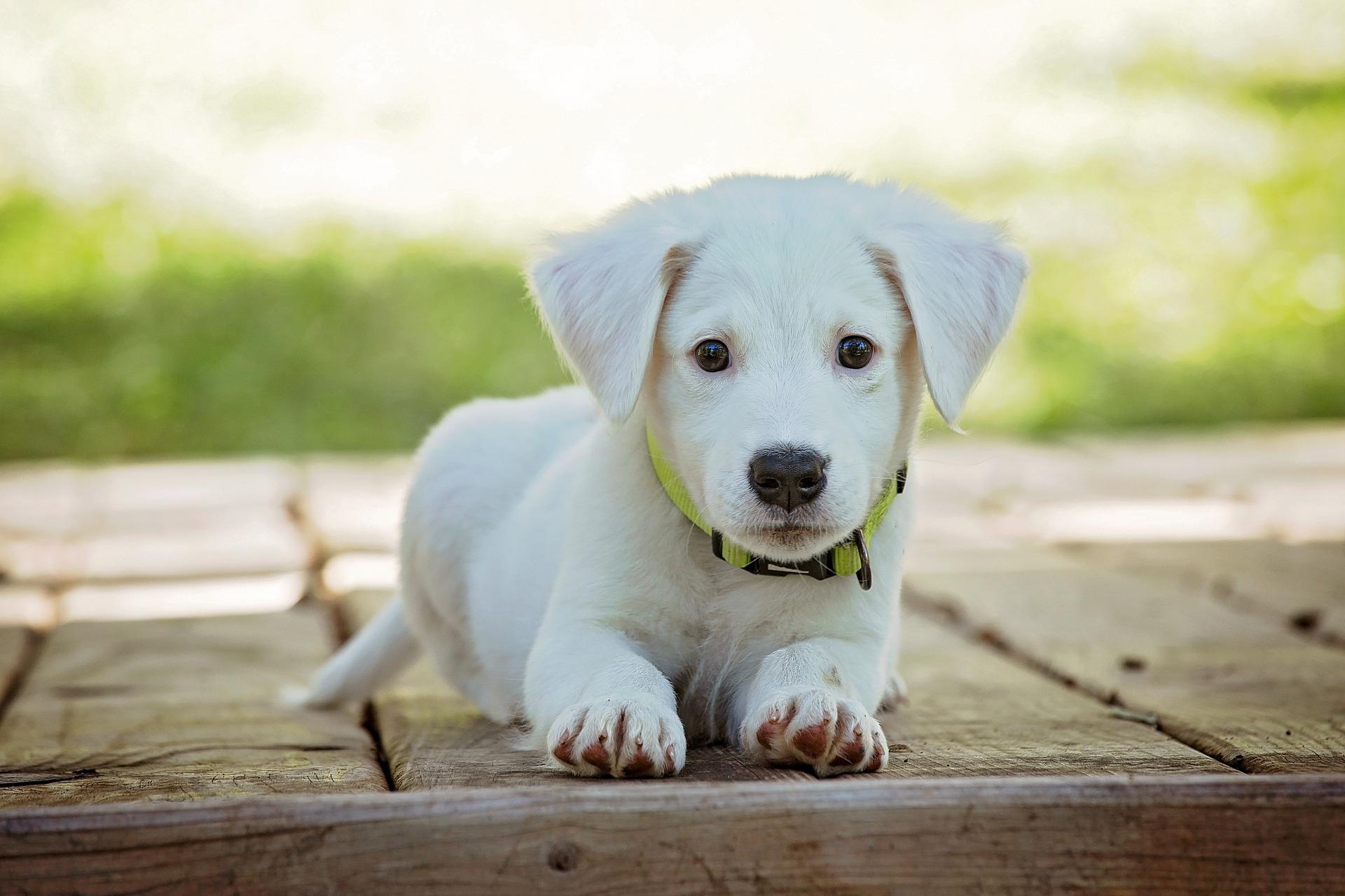 Warum Hundehalter haftpflichtversichert sein sollten